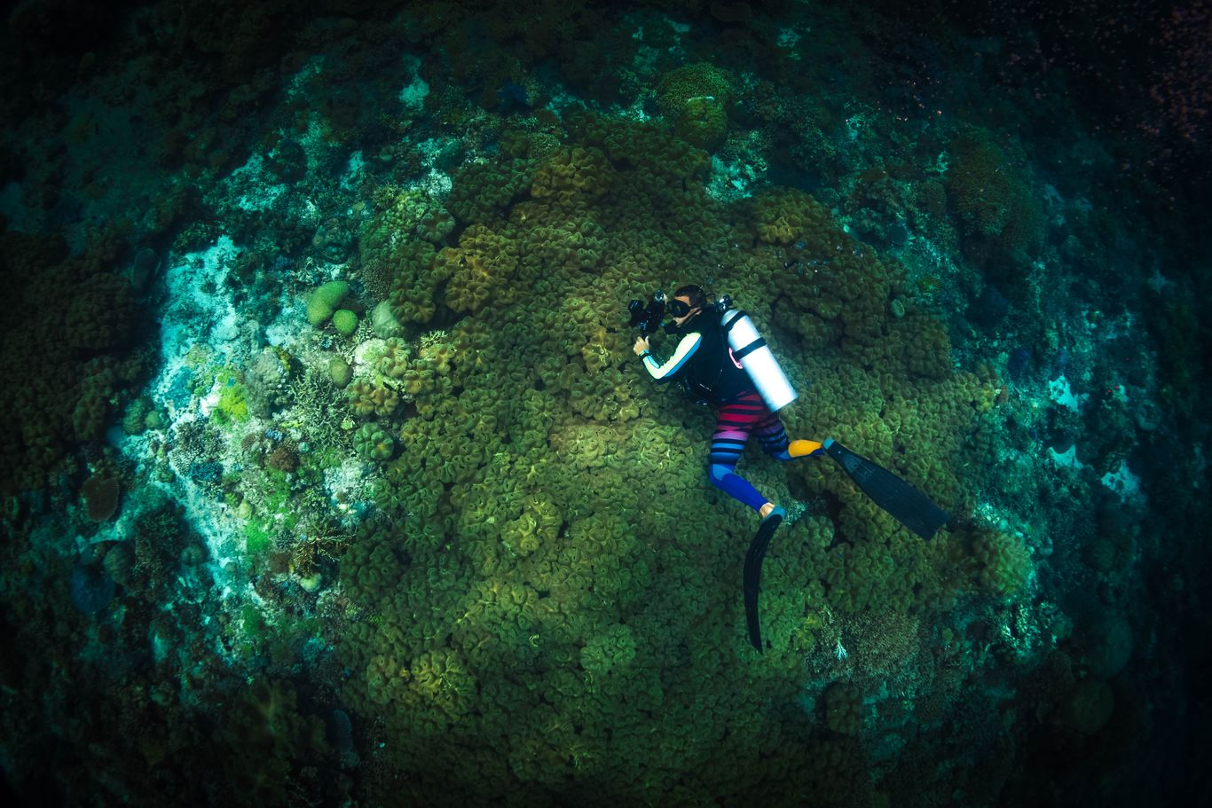 Scuba diver with a camera swimming over coral reefs