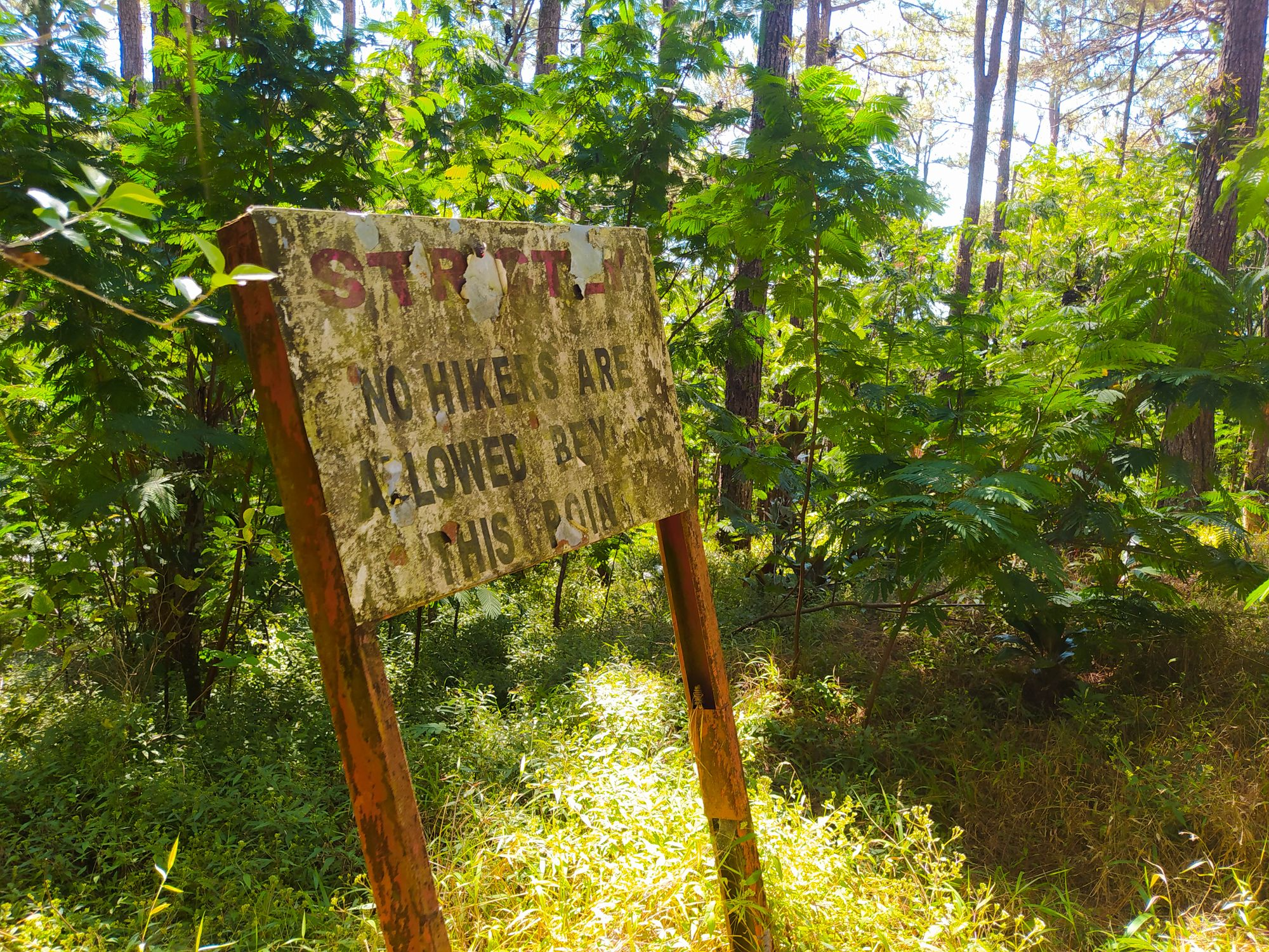 Old, dirty, and worn-out sign in the middle of the woods