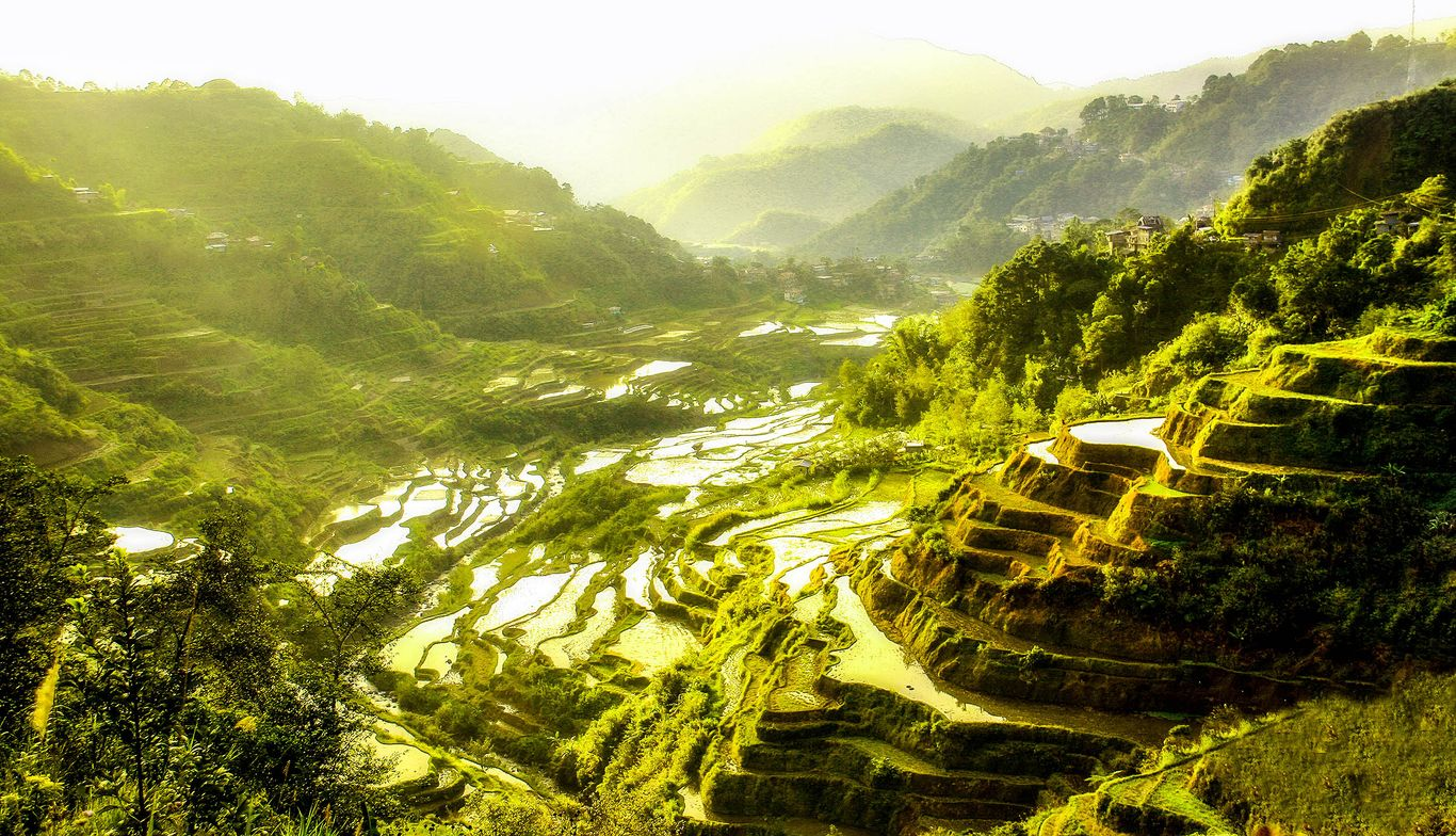 Terraced paddy fields carved on the slopes and sides of green hills and mountains