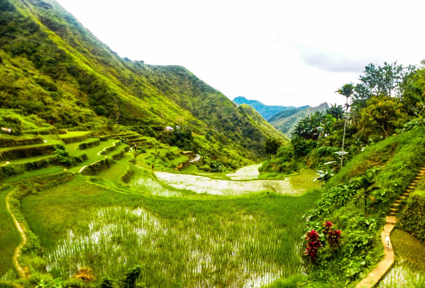 Crops grow on verdant rice terraces carved on the slope of a mountain