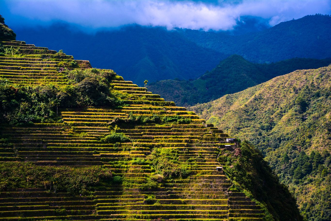 Rice terraces carved on the sheer, steep slope of a mountain, with higher mountains whose peaks are shrouded in clouds standing in the backdrop
