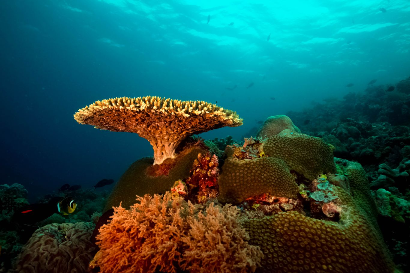 Different types of corals in the Tubbataha Reefs Natural Park, one of the UNESCO World Heritage Sites in the Philippines