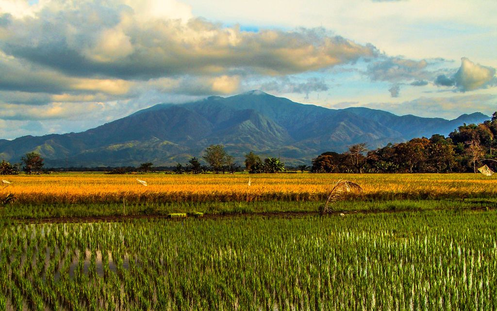 A view of flatlands with fields and rice paddies backdropped by a dark mountain range, specifically the Caraballo Mountains, one of the mountain ranges of the Philippines