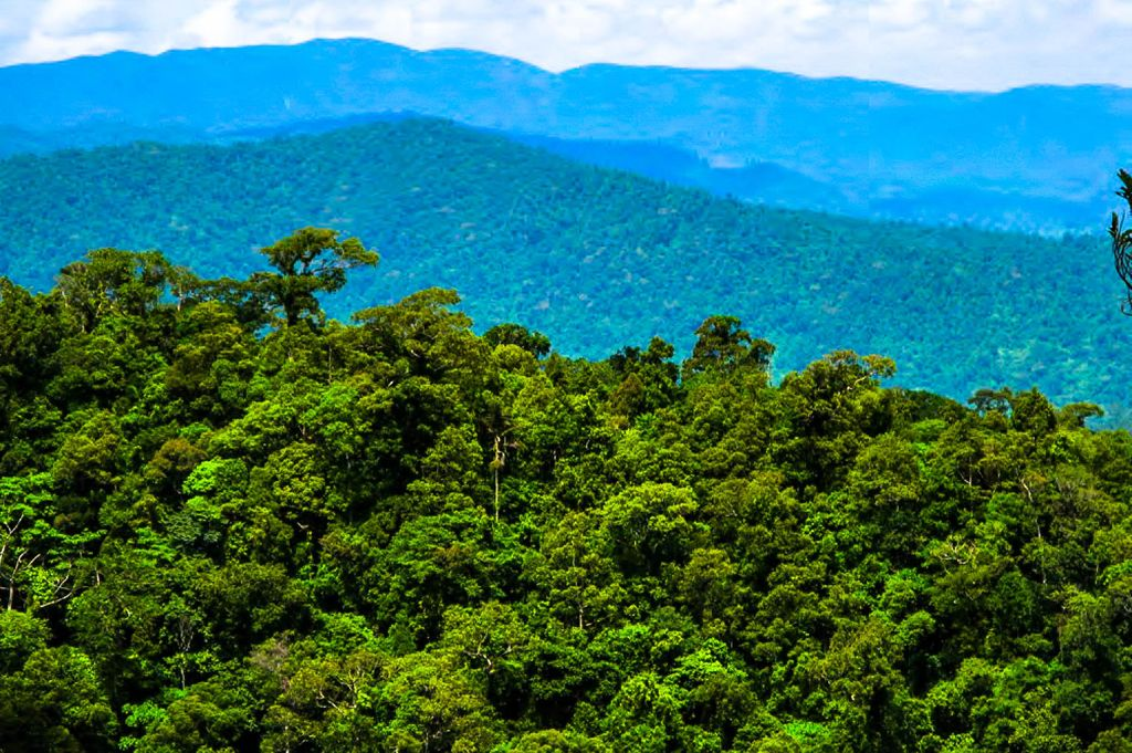 A view of a forested mountain range, namely the Sierra Madre, the longest mountain range in the Philippines