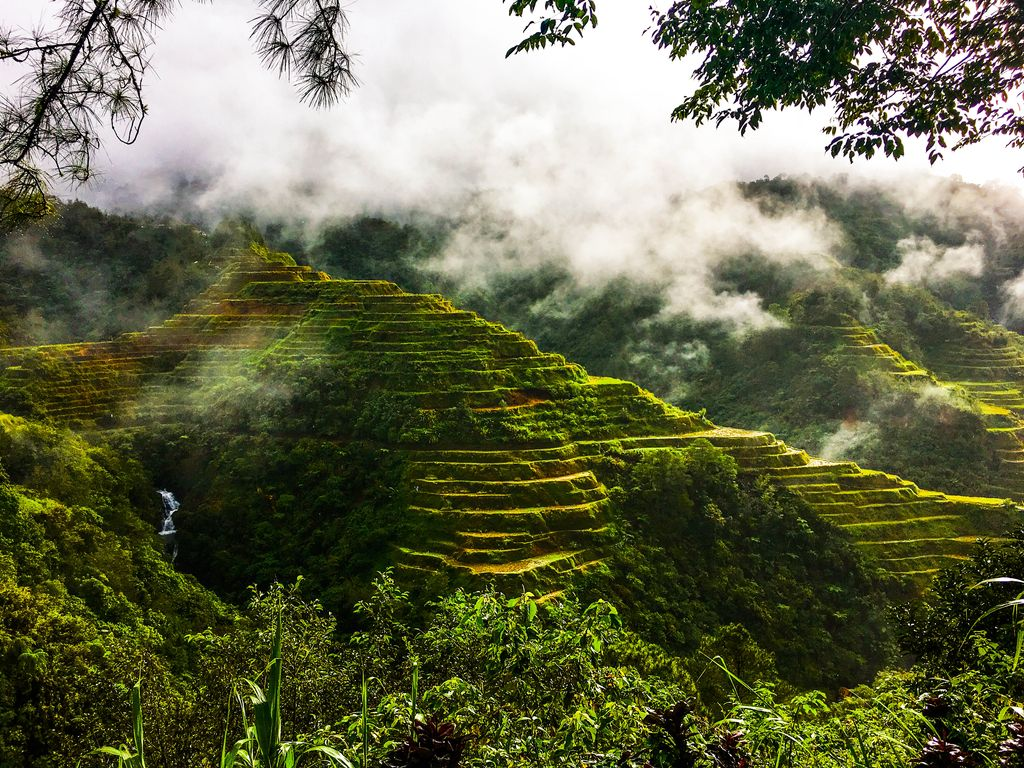 Verdant rice terraces carved on the slopes of a mountain, upon whose forested top mist clings heavily