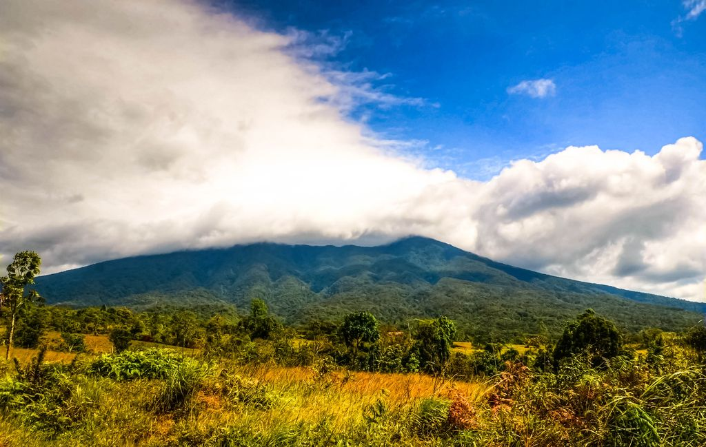 A mountain range rises over plains and fields covered with dense vegetation