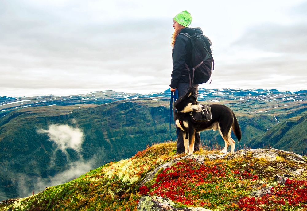 A woman and her dog stands on moss- and lichen-encrusted high ground, overlooking a mountainous scenery beneath an overcast sky