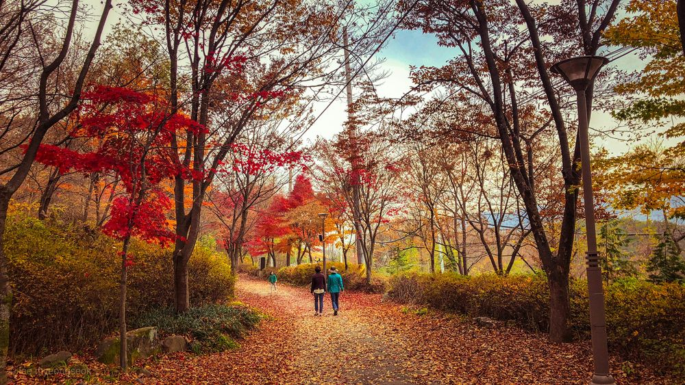 People walk along a pathway covered with fallen leaves and bounded on either hand by trees in full autumn splendor