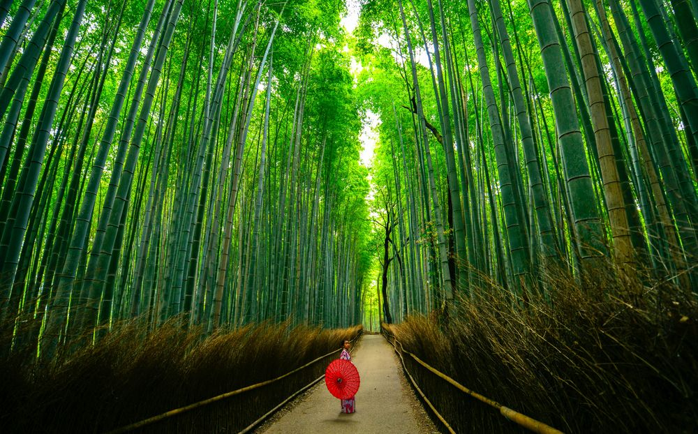 A Japanese woman wearing a kimono and carrying a traditional Japanese umbrella stands in the middle of a pathway bounded on either side by towering walls of green bamboo trees; she is likely currently practicing shinrin-yoku, or forest bathing