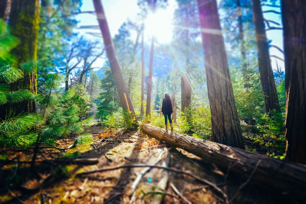 A woman walks along a massive log in the middle of a forest brightly lit by sunlight; the woman is likely currently engaging in shinrin-yoku, or forest bathing