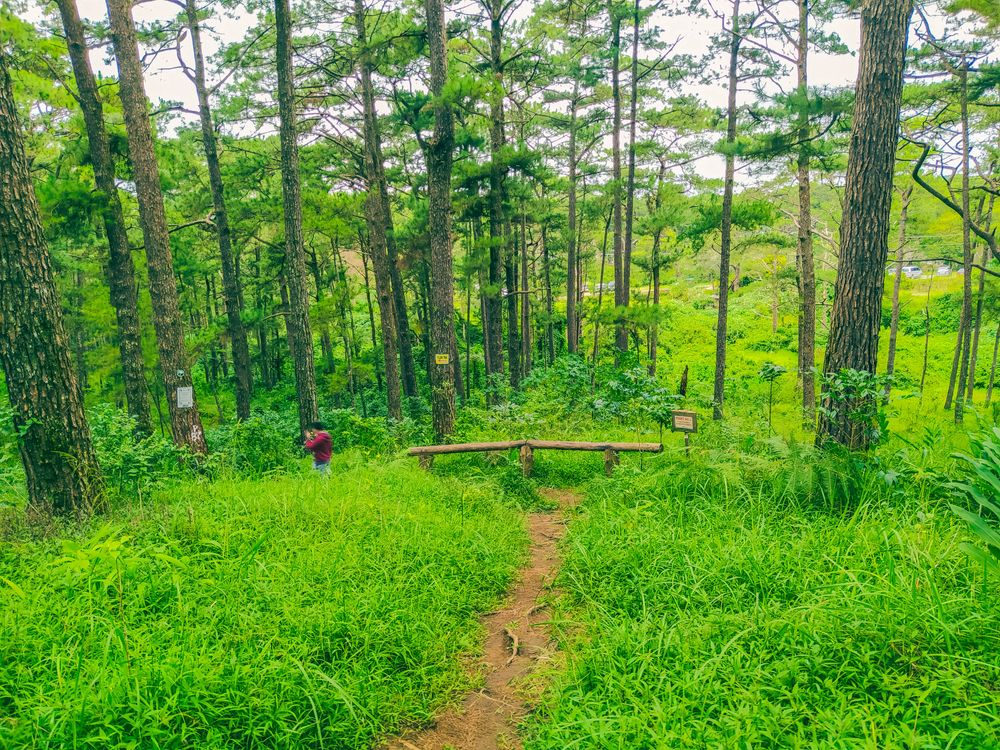 A man walks down a dirt trail that winds through grasses, ferns, and pine trees in a forest