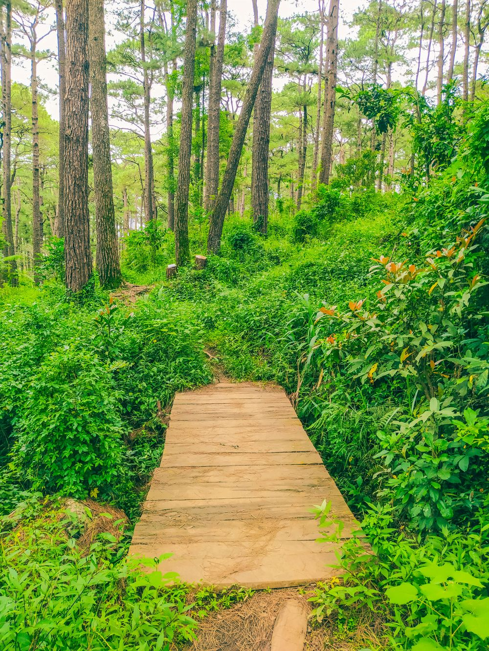 A wooden footbridge in the middle of a lush and verdant forest somewhere along the Yellow Trail