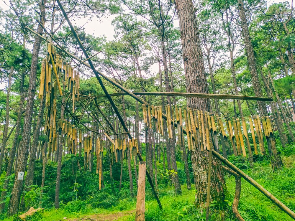 An array of bamboo wind chimes suspended in the middle of a forest
