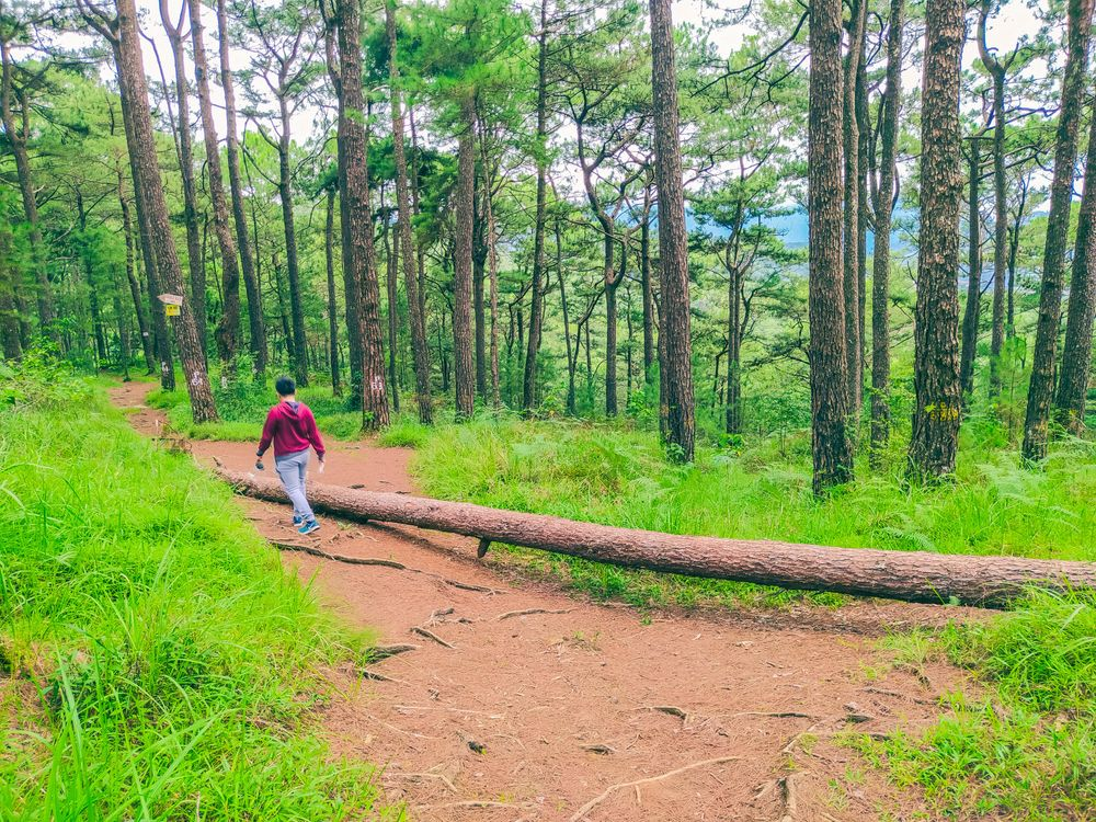 A man walks past a fallen log in the middle of a forest at the Yellow Trail