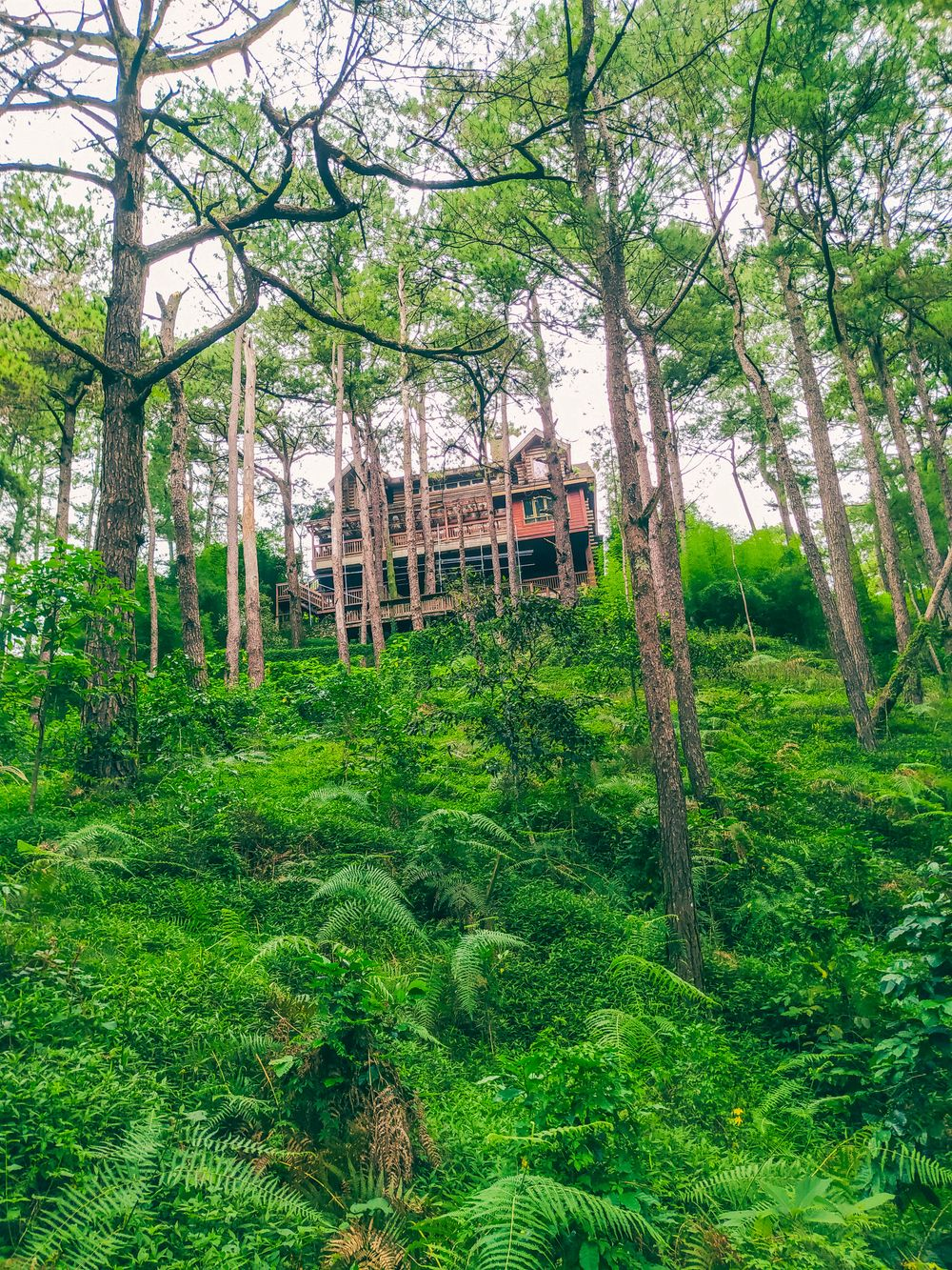 A brown house on top of a hill clad with ferns, plants, and trees