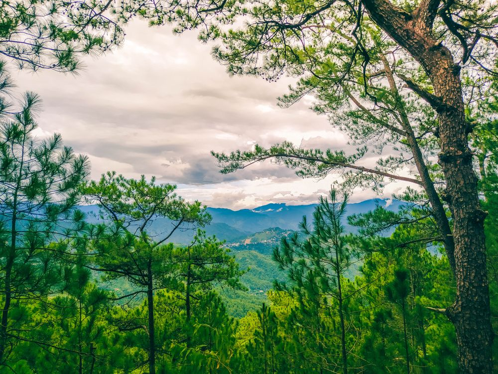 A view of green and blue mountains beneath a gray sky, all framed by trees in a forest somewhere along the Yellow Trail