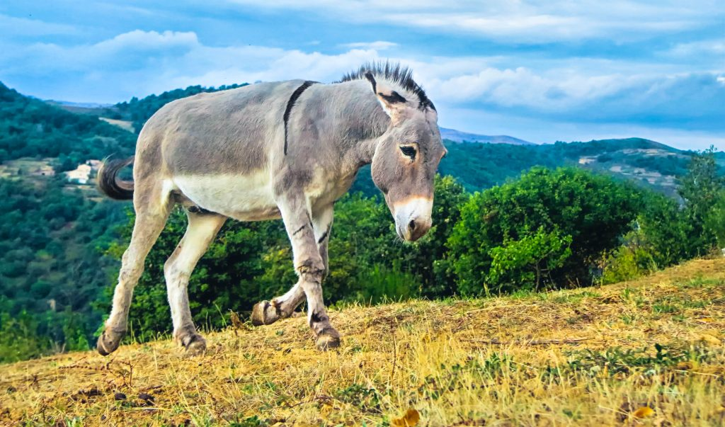 Featured image for the article 'Travels with a Donkey in the Cevennes by Robert Louis Stevenson: A Book Overview and Review' in phmillennia