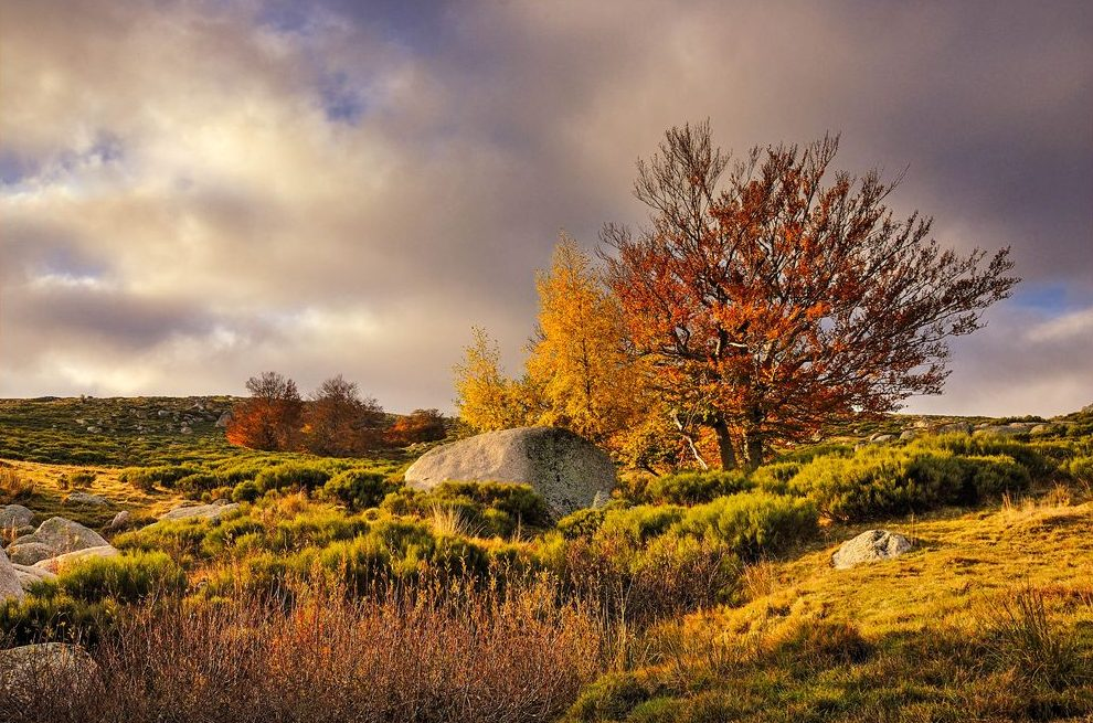 An autumn landscape of grass, shrubs, bushes, and trees beneath a cloudy sky