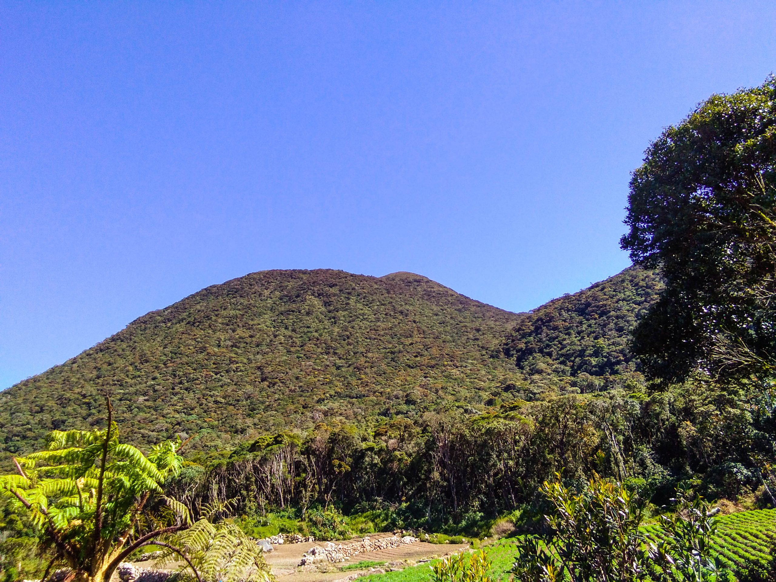 A green, forested mountain (Mount Tabayoc, one of the highest mountains in the Philippines) rises above a densely vegetated plain beneath a clear blue sky