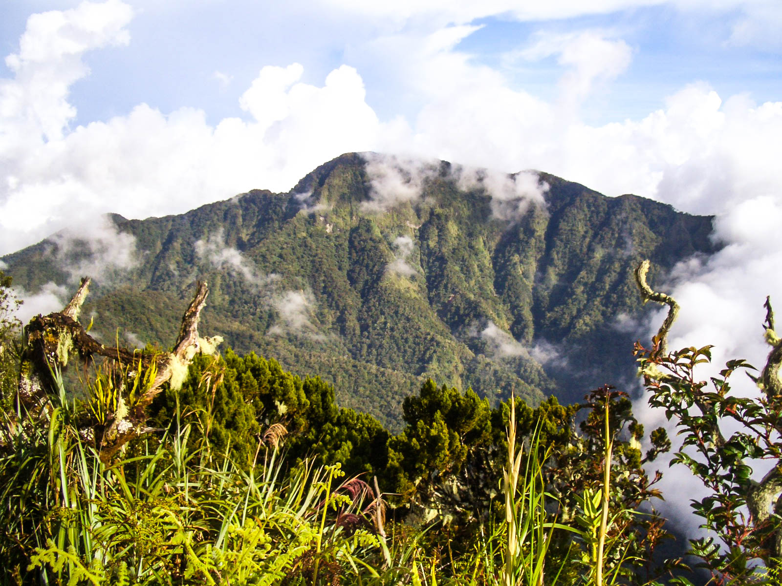 A wild forest of trees and plants backdropped by a green mountain (Mount Dulang-Dulang, the second highest mountain in the Philippines) swathed with cloud and mist