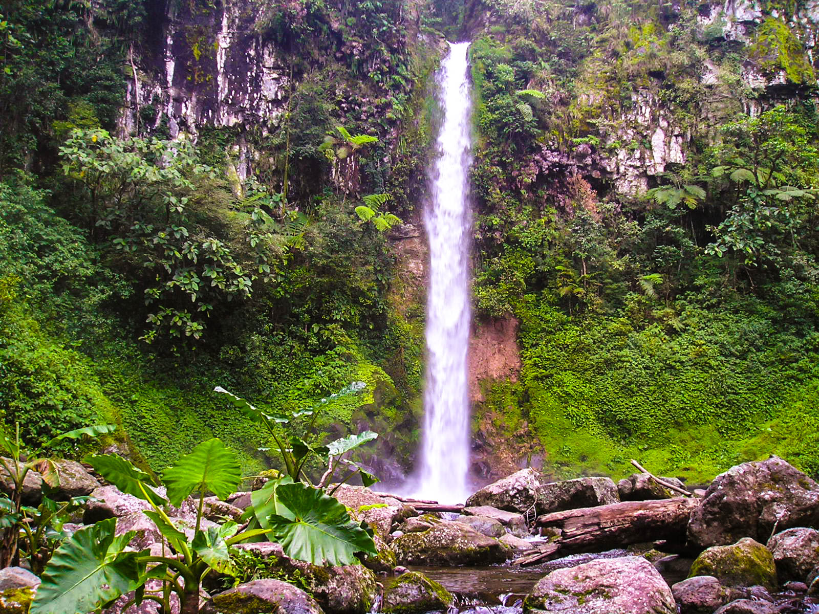 A waterfall cascading from a cliff overhung with vegetation