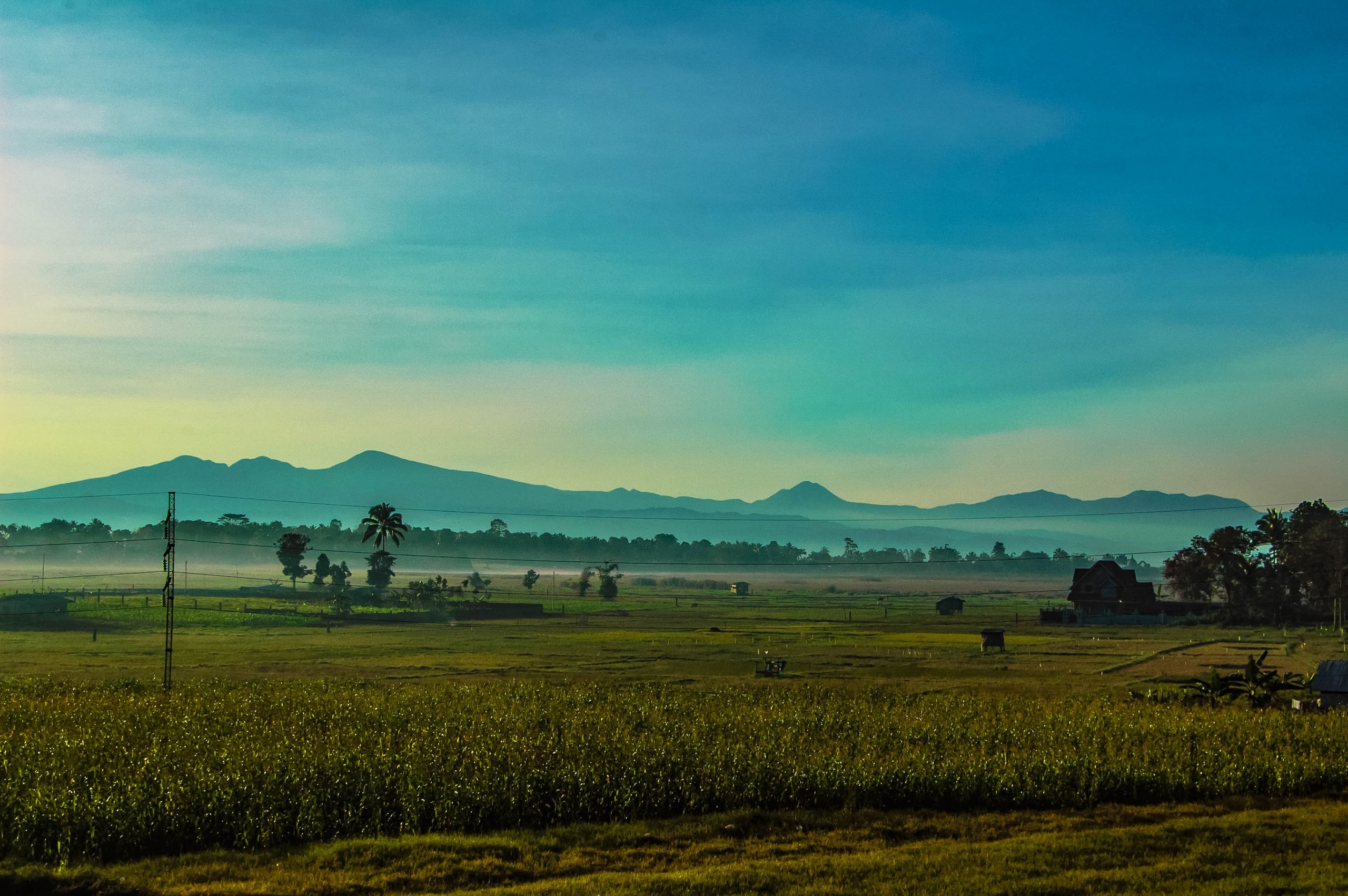 A view of green field planted with crops, behind which rises a mountain range (the Piapayungan Mountain Range, whose highest peak is Mount Piapayungan, one of the highest mountains in the Philippines)