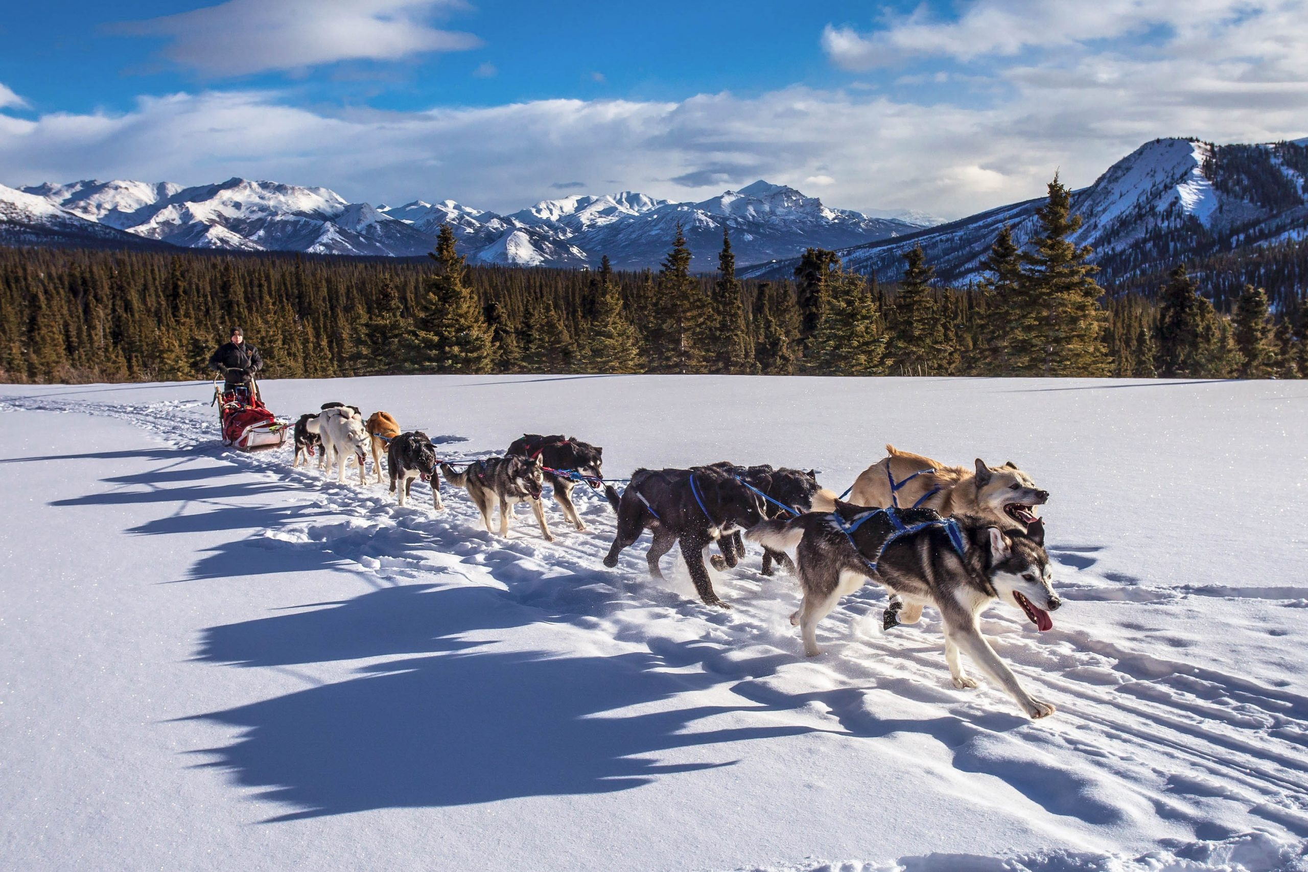 "A team of dogs hauling a dogsled across a snowy landscape, such as a scene that can be imagined from the novel ""The Call of the Wild"" by Jack London"