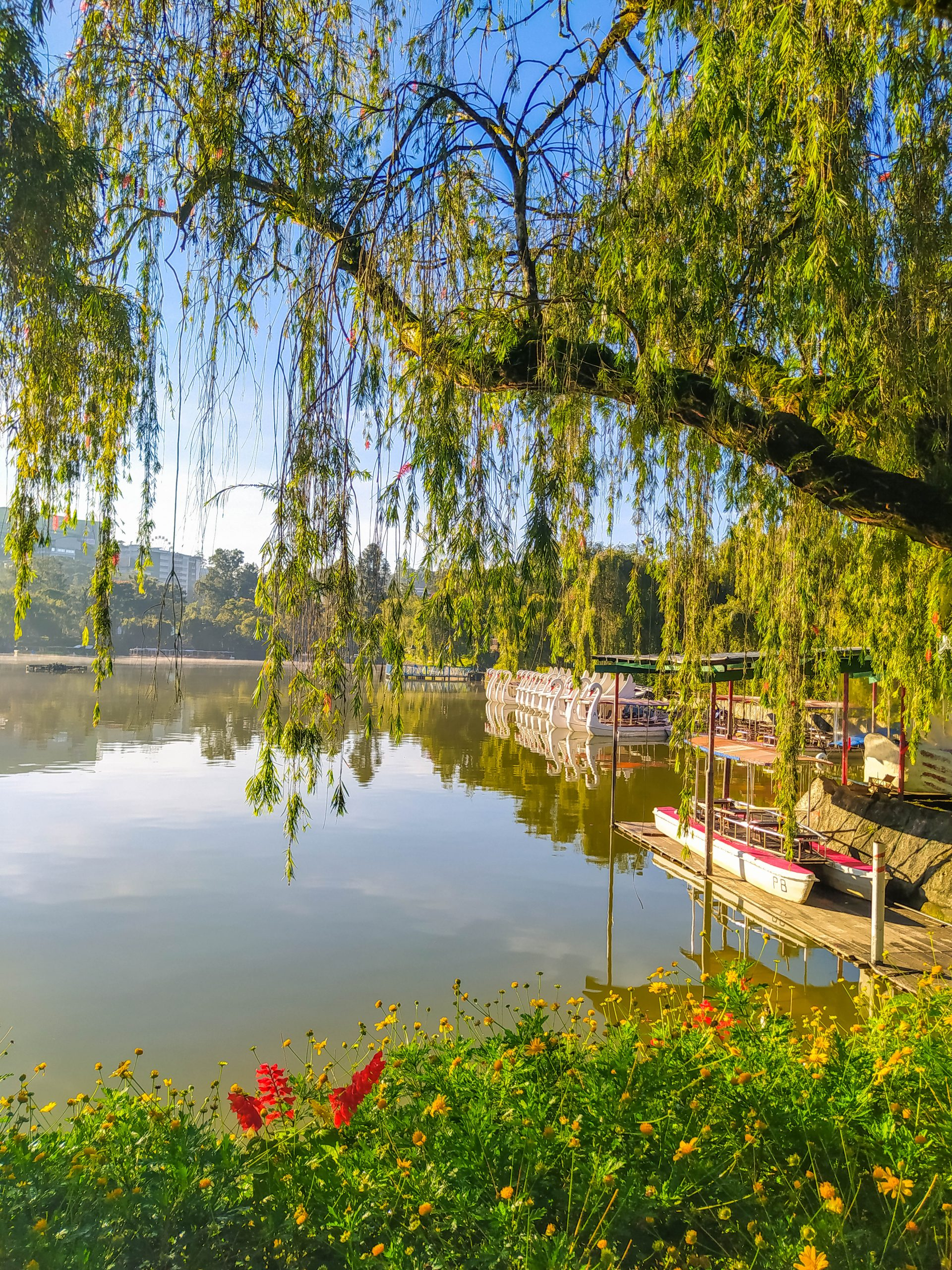 The calm, greenish-brown surface of Burnham Lake, with boats moored on the shoreline, seen through a frame of leaves, branches, and flowers
