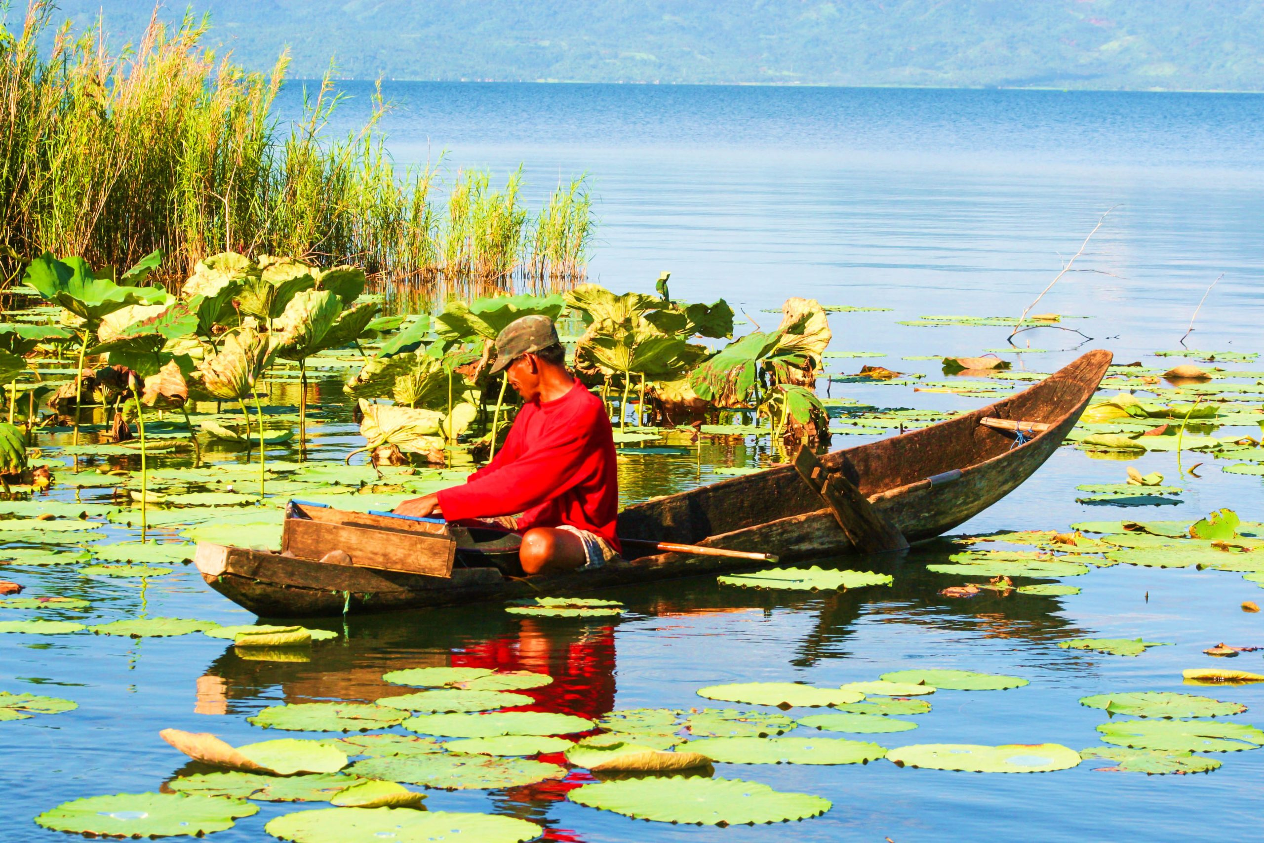 A man in a dugout canoe floating over a water covered with lilies and grasses