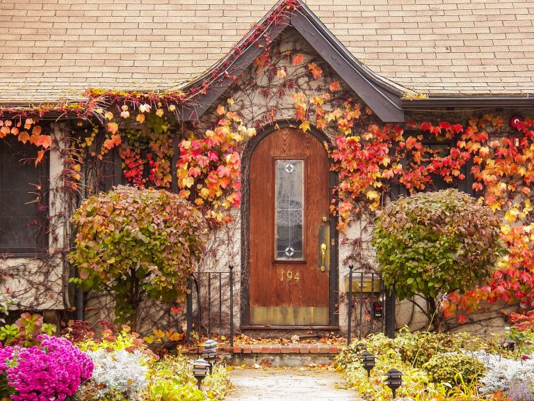 "A door covered with flowering vines and other plants, used as the featured image for the article ""Bucolic Bliss and Beauty: 100 Delightful Pictures of Cottagecore"" on phmillennia.com"