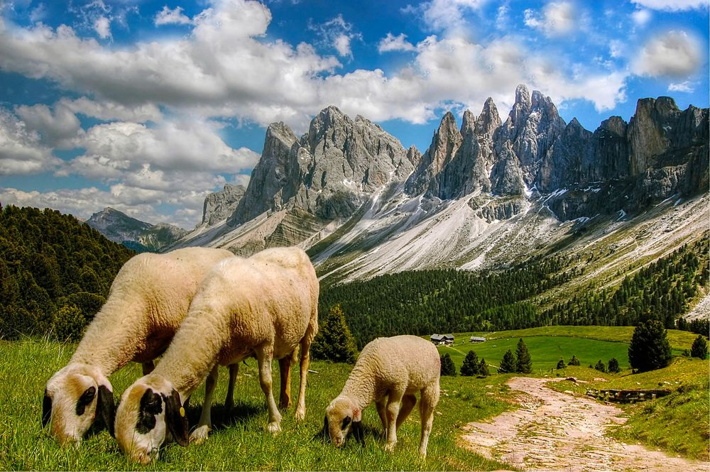 """Sheep graze upon a green meadow backdropped by jagged mountains beneath a cloudy sky, an image used in the article """"Heubad: The Alpine Tradition of Hay Bathing"""" on phmillennia.com"""