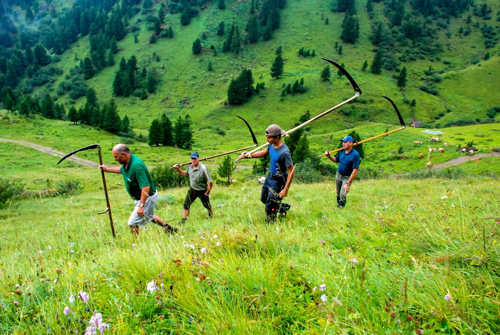 """A group of men holding scythes walk along a grass-clad slope in a green valley filled with trees, an image used in the article """"Heubad: The Alpine Tradition of Hay Bathing"""" on phmillennia.com"""