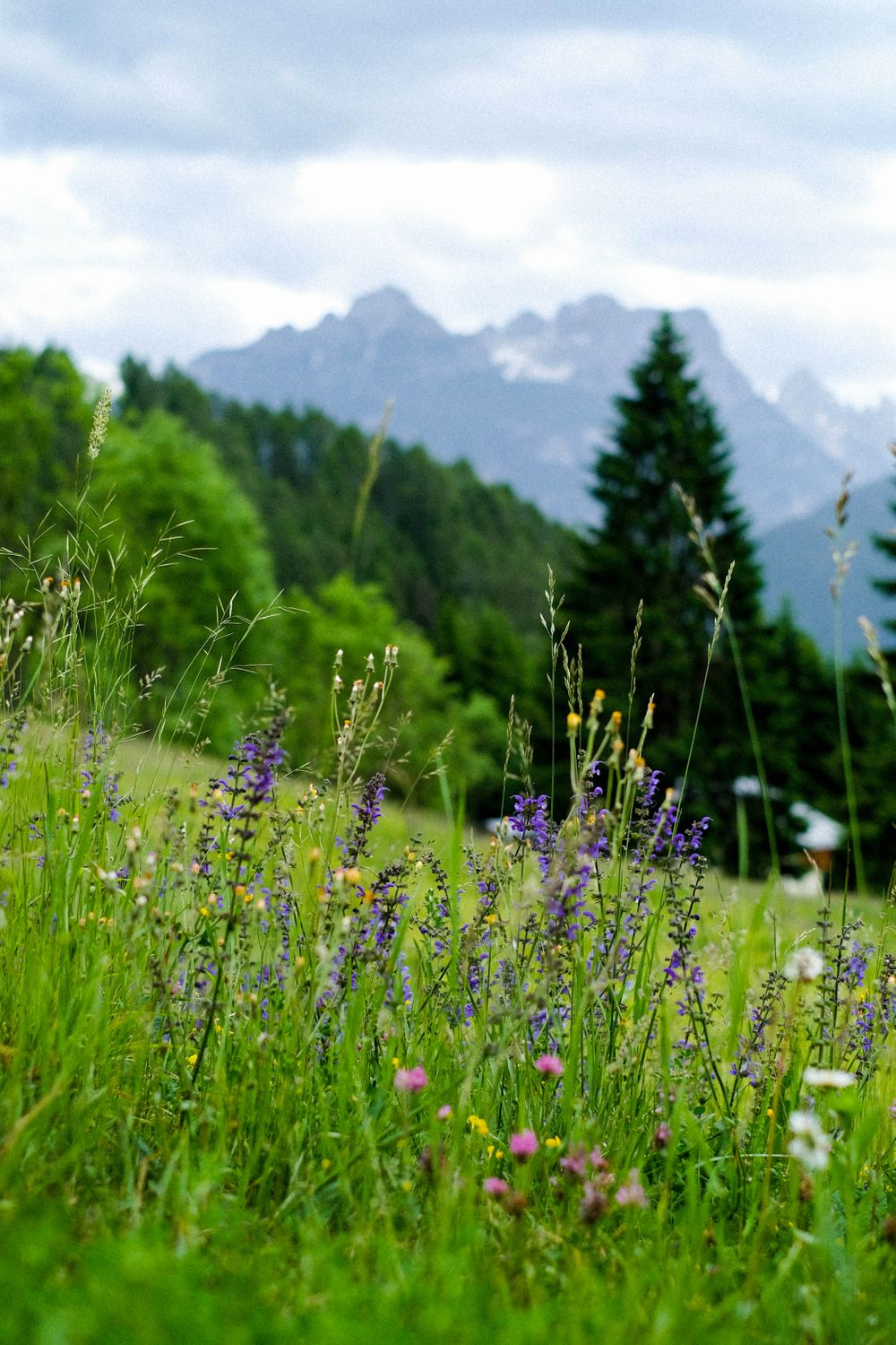 A grassy field full of flowers backdropped by forested slopes and mountains