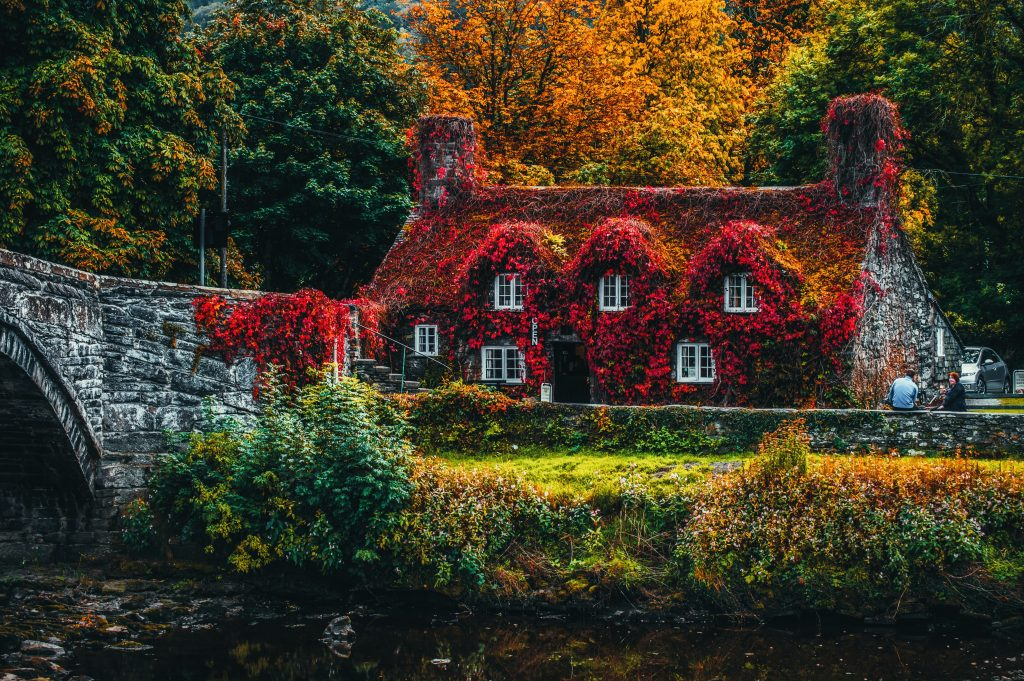 A large cottage-style house covered by flowers and backdropped by trees in autumn, perhaps a depiction of cottagecore