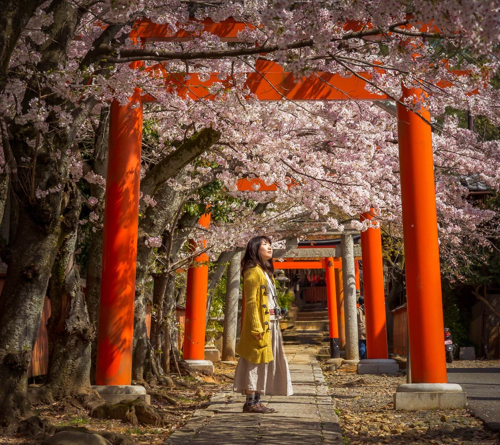 A girl stands on a pathway overhung by pagodas and cherry blossom trees, perhaps carrying out her own form of hanami