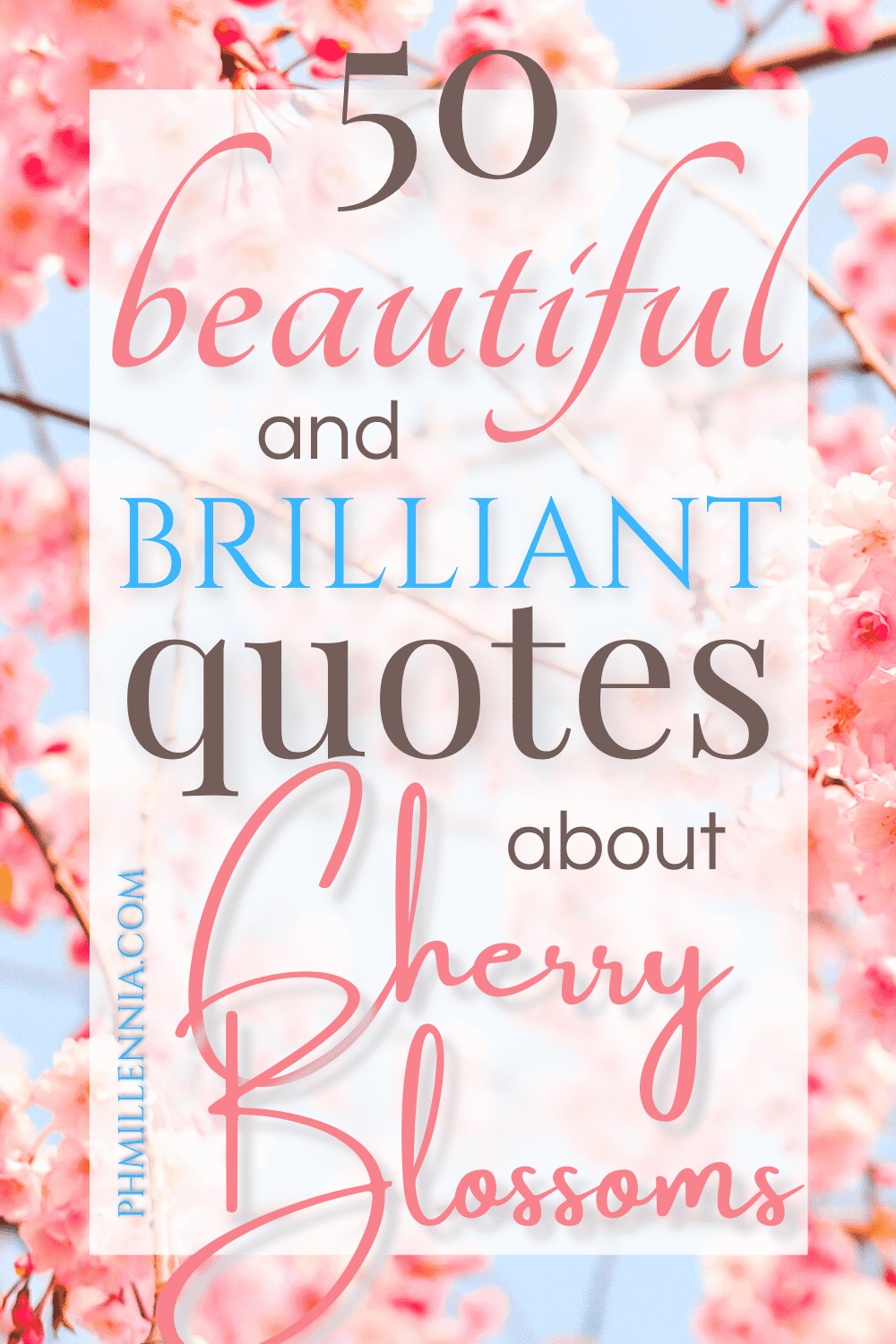 """An image of cherry blossoms or sakura, featured as a Pinterest pin for the article """"50 Beautiful and Brilliant Quotes about Cherry Blossoms"""" on phmillennia.com"""