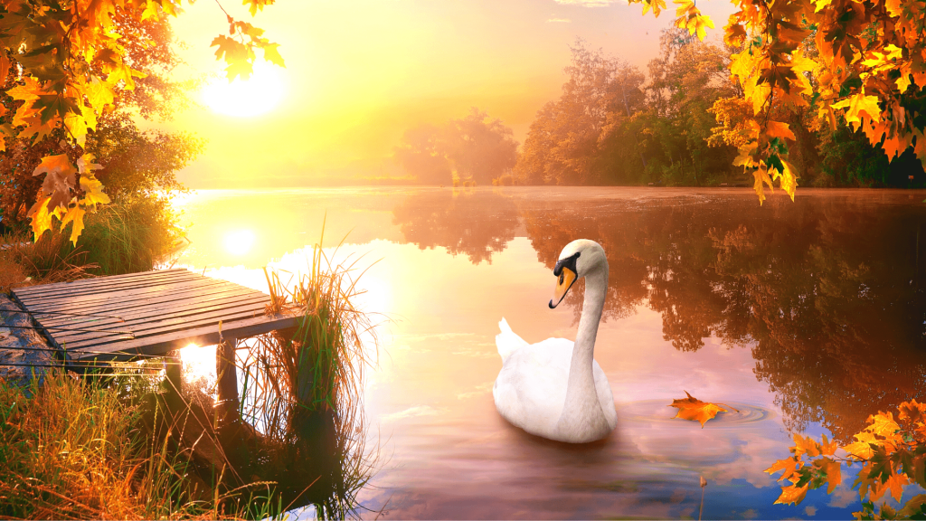 """An image of a swan gliding over a lake surrounded by autumn woods and fall forests during sunset, used as the featured image for the article """"199 Autumn Quotes to Fall Deeply and Spectacularly in Love With"""" on phmillennia.com"""