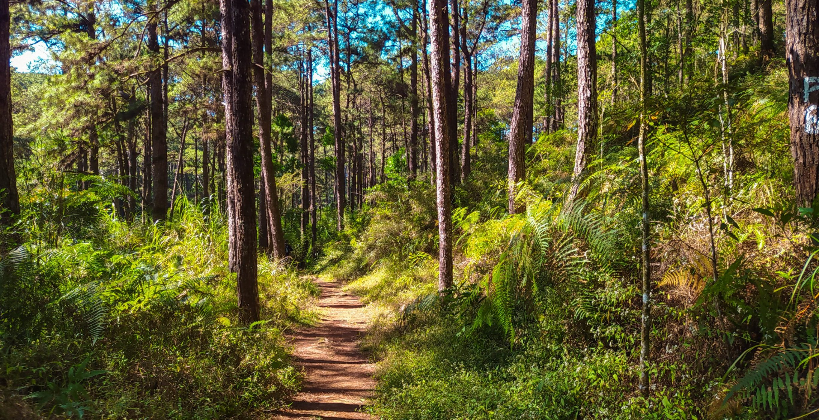 A Tale of Camp John Hay's Eco-Trail | phmillennia