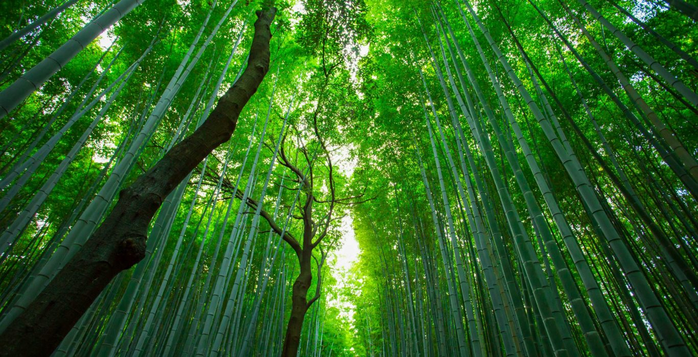 Shinrin-Yoku: The Japanese Healing Art of Forest Bathing | phmillennia | Featured Image by JuniperPhoton on Unsplash (modified)