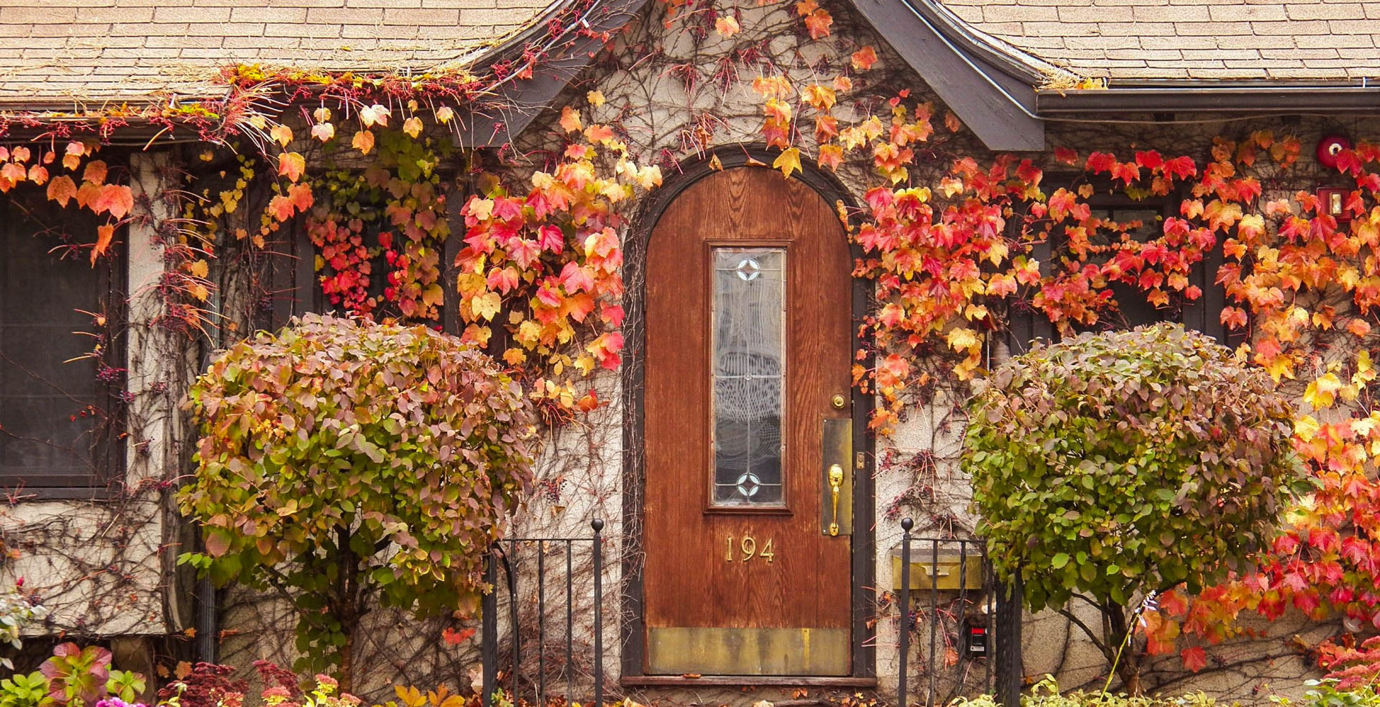 A door covered with flowering vines and other plants, used as the featured image for the article