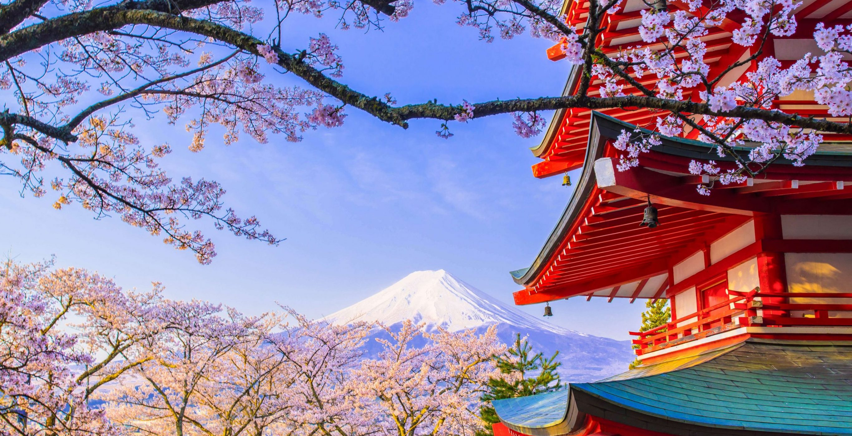 Hanami: The Japanese Celebration of Springtime and the Sakura | phmillennia.com | Featured Image by alpiniste074 on Flickr (modified)