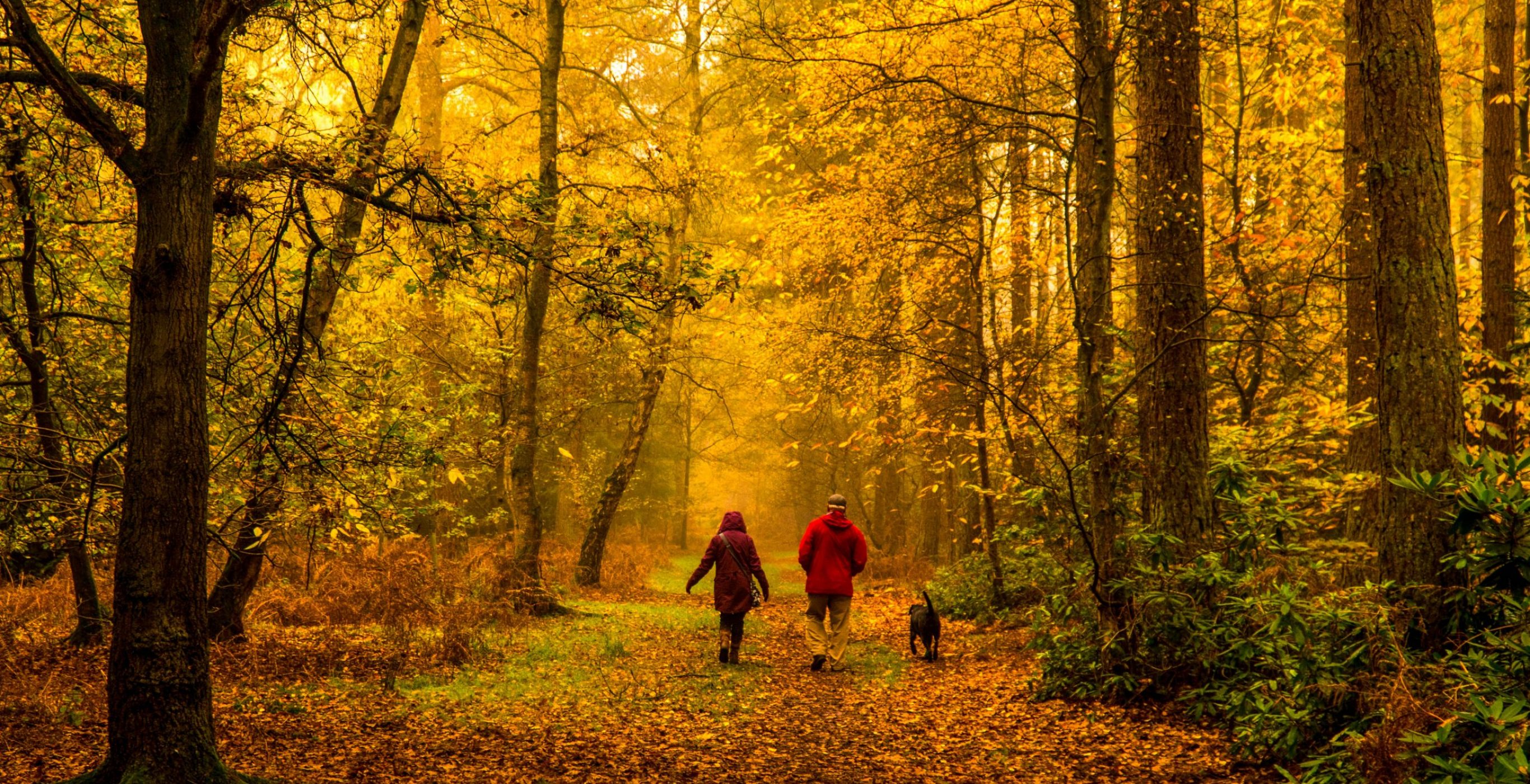 A couple and their dog walks along a leaf-covered path in the middle of the woods in autumn