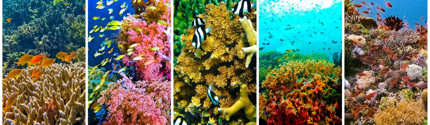 Top dive sites in the Philippines with feature image of tropical fishes and coral reefs in Philippine waters including the Tubbataha Reefs in Palawan and the Verde Island Passage in Batangas